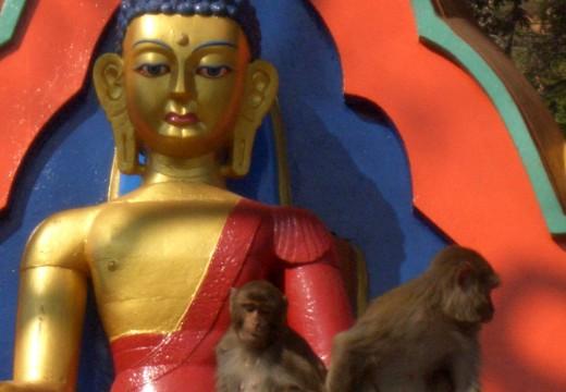 Monkeys in Kathmandu Temples
