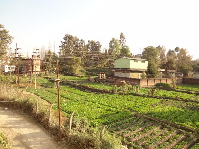 Agriculture Internship in Nepal   Volunteering in Nepal