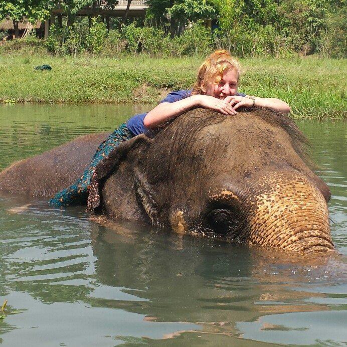 elephant care volunteer