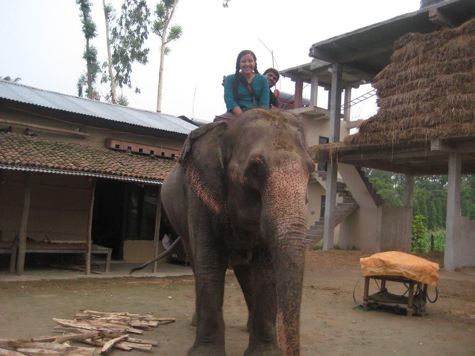 elephant volunteer